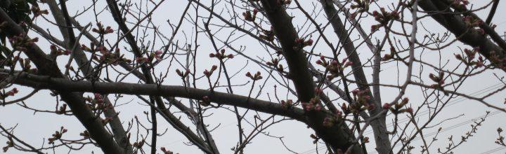 テニス部活動報告 3月のテニス部は2回やりました。お花見は空振り【開催報告】